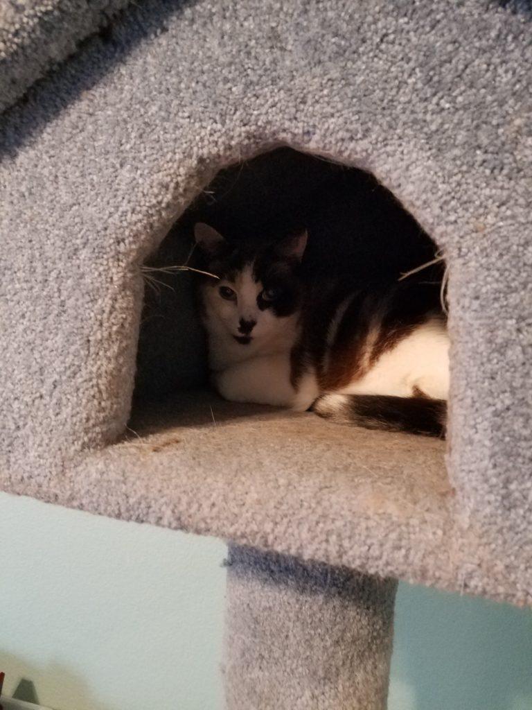 Yuri in her tower