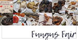 The Fungus Fair